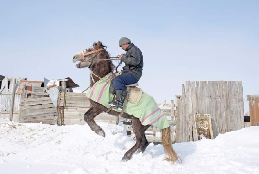 Les chevaux réapparaissent au printemps