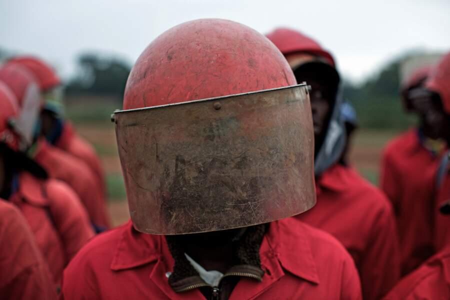 Les Fourmis rouges d'Afrique du Sud