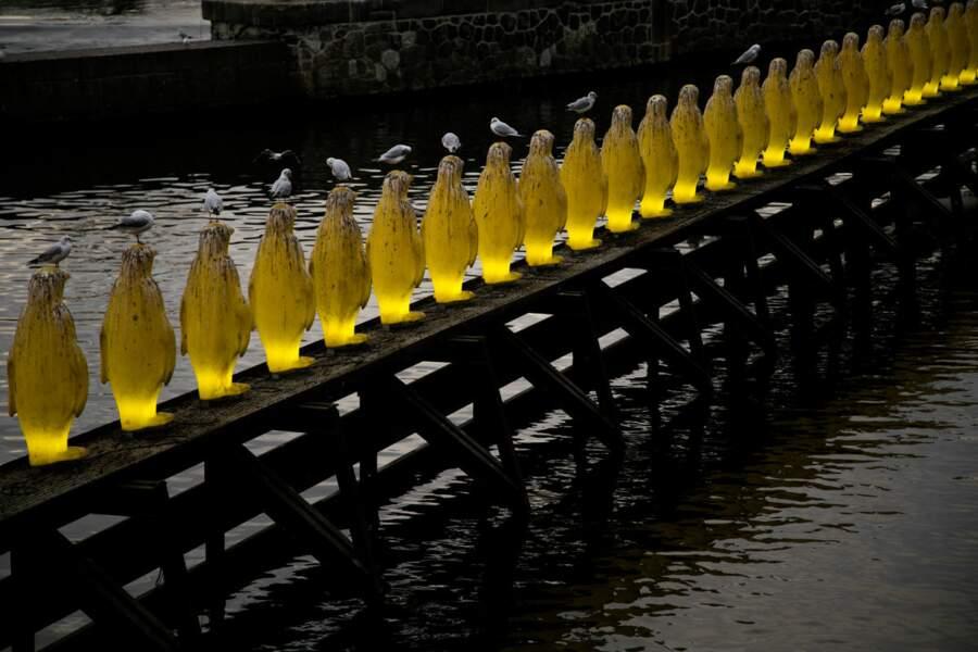 Les pingouins de Prague