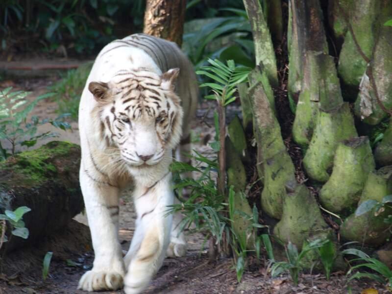 L'impressionnant zoo de Singapour