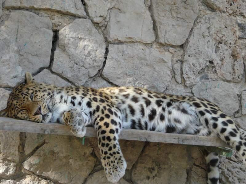 Le zoo du mont Faron, la fauverie de Toulon