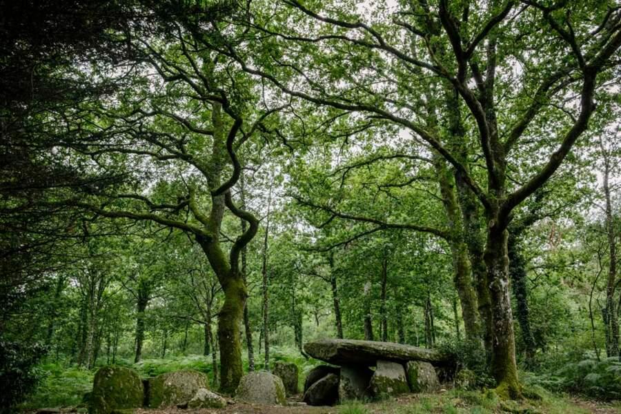Site funéraire de la Loge-au-Loup, à Trédion