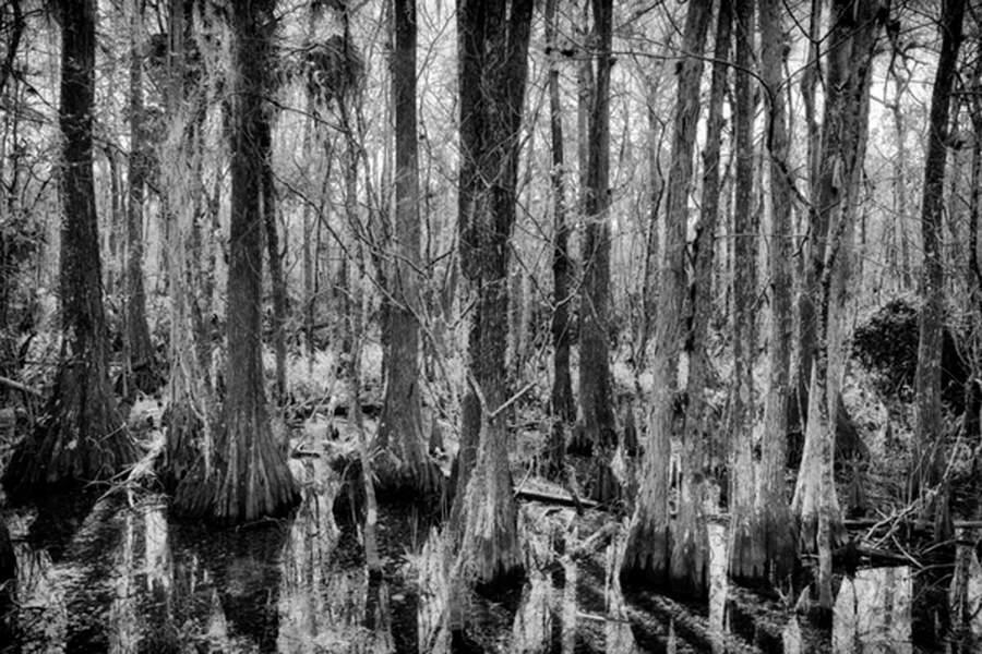 Le plus grand écosystème de mangrove du continent américain