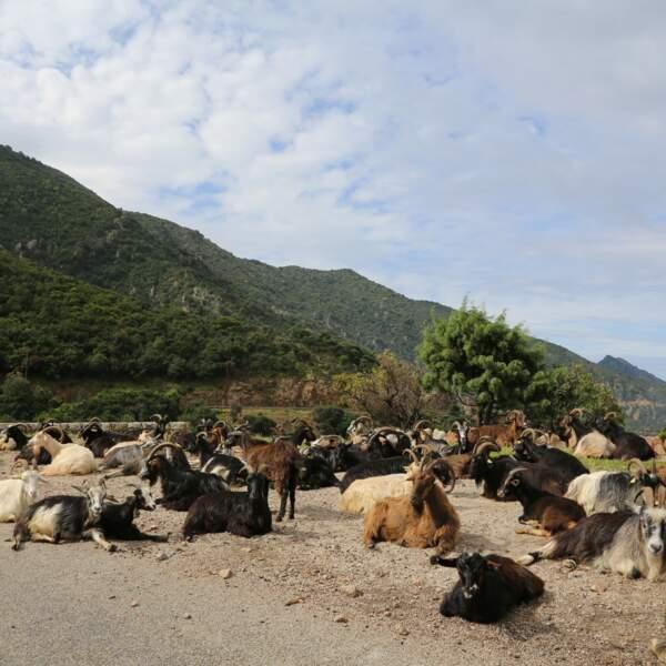 Rencontre insolite sur la route de Calvi à Porto