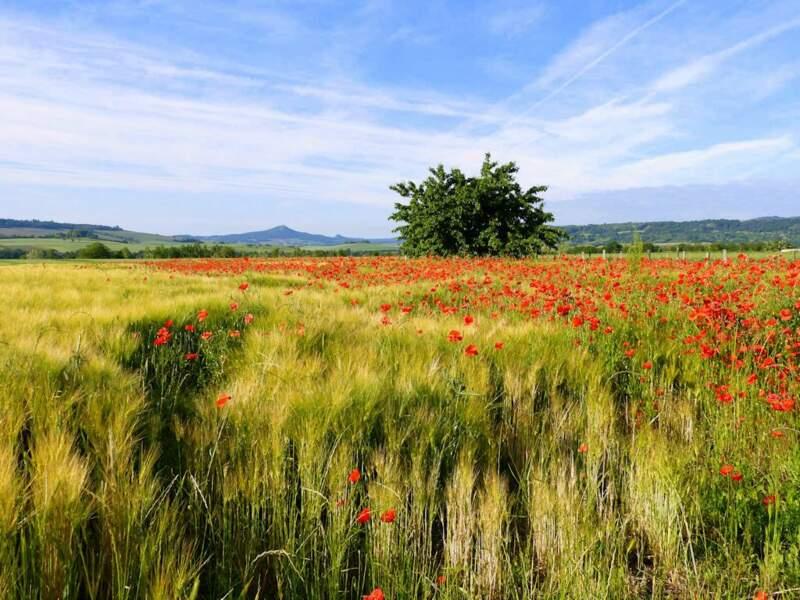 Photo prise à Neschers (Puy-de-Dôme) par le GEOnaute : raymonde.contensous