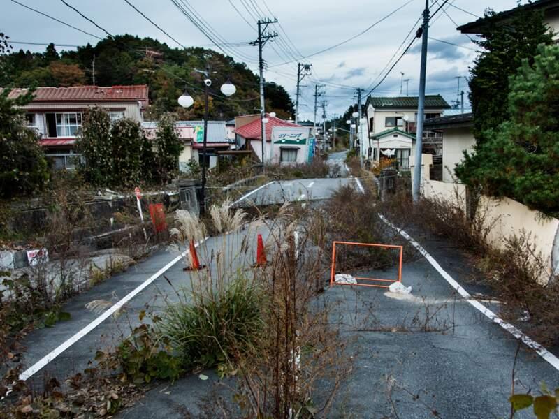 La nature reprend ses droits sur la terre ravagée de Fukushima