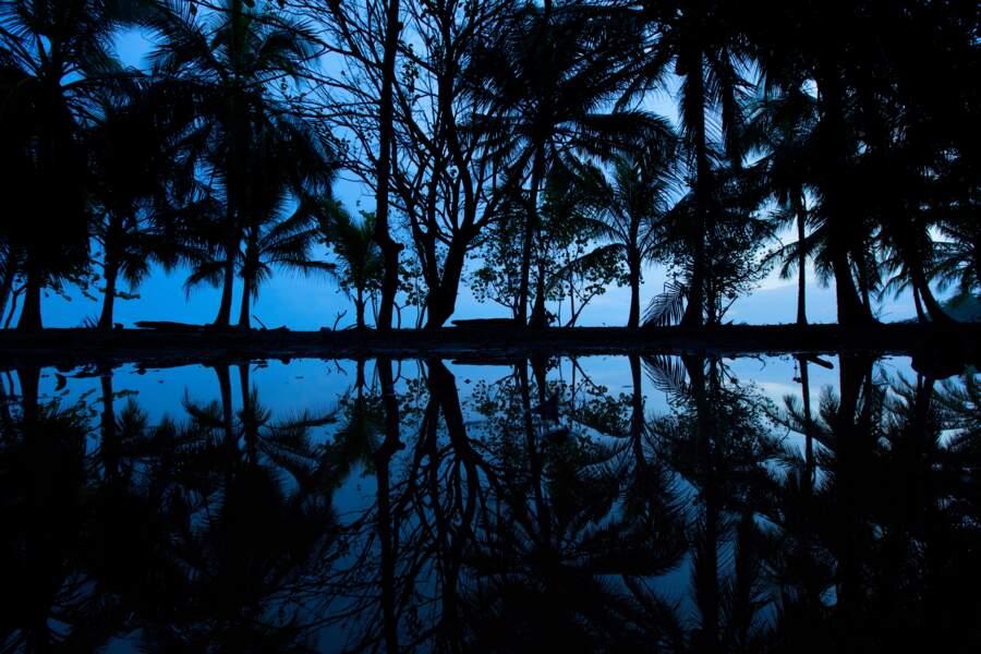 Des animaux rares se cachent derrière les rideaux de cocotiers