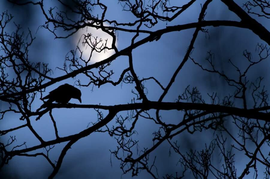 Le corbeau au clair de lune / Gideon Knight, vainqueur 2016 catégorie jeunes photographes