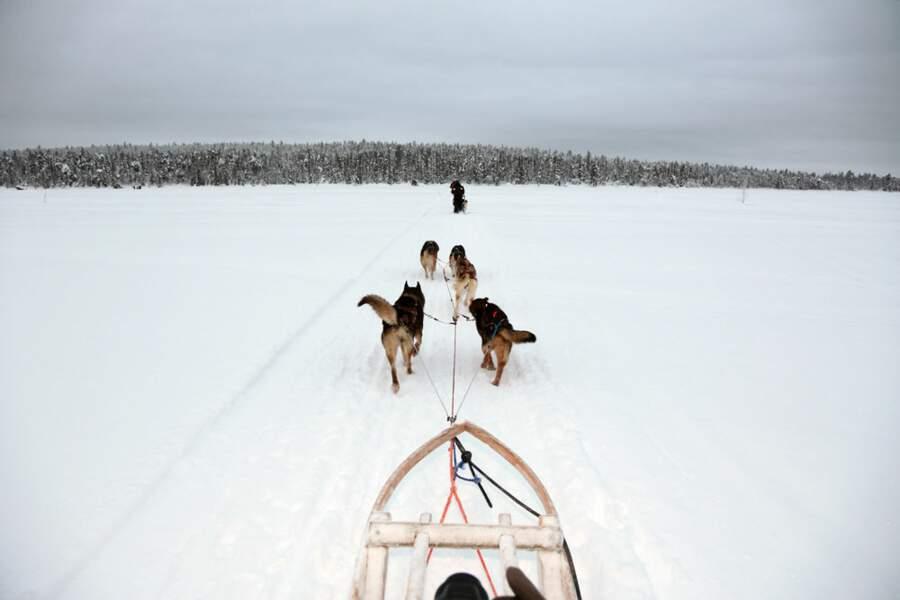 Chiens de traineaux en Laponie finlandaise