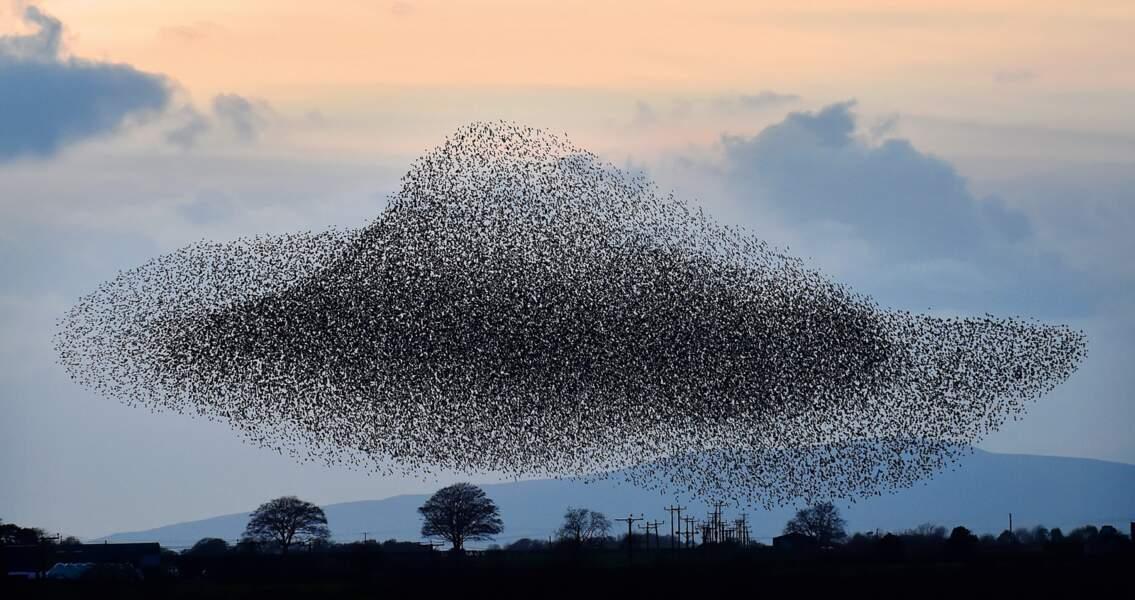 Région de Rigg, Écosse : géant volant dans un ciel d'automne