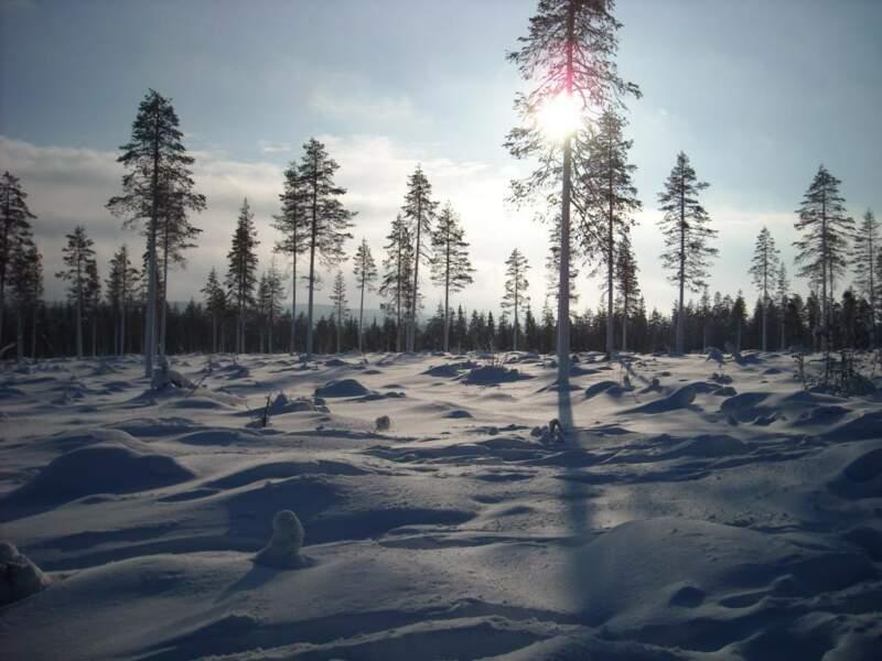 Sinetta, Finlande, par Annelise Guigues / Communauté GEO