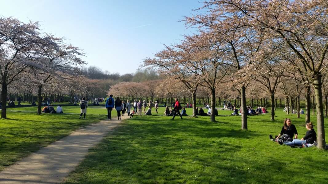 Les parcs d'Amsterdam
