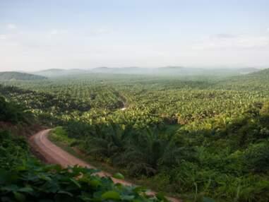 Enquête sur la déforestation en Indonésie
