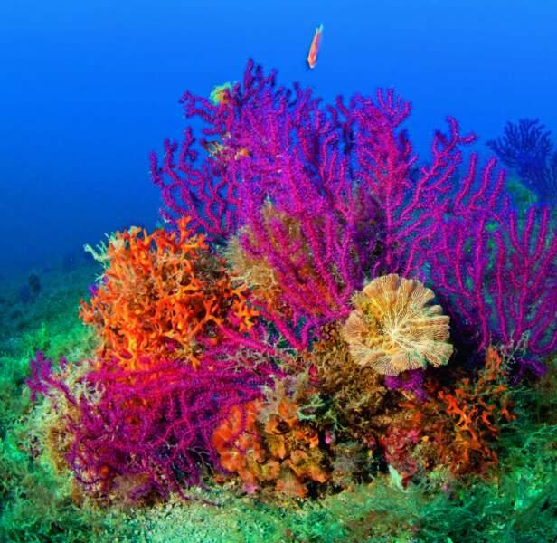 2015 : le blanchissement des coraux