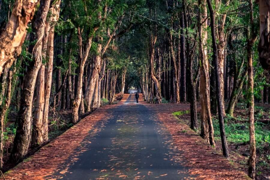 Au bout du bitume, la dernière forêt primaire de l'île
