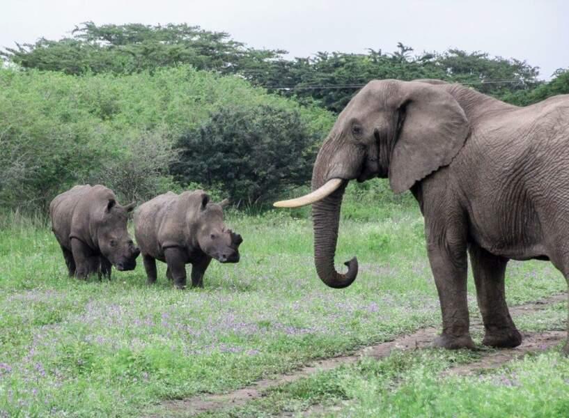 Un orphelinat pour rhinocéros