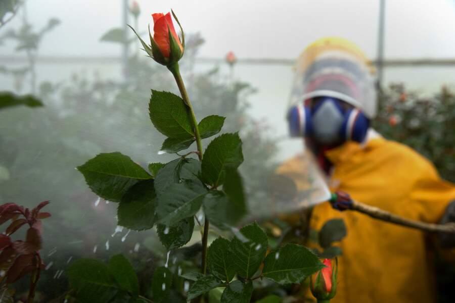 Réglementer l'usage des produits toxiques