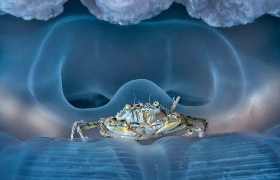 Un crabe médusé sur l'île italienne de Procida