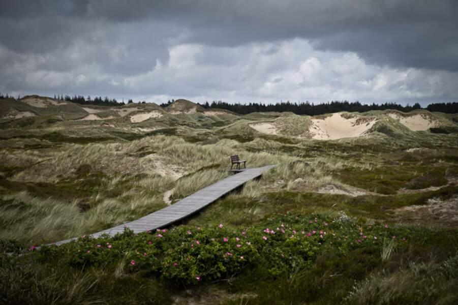 Allemagne - Amrum, dans le vent de la mer des Wadden