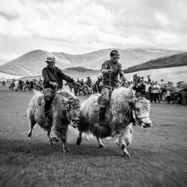 Le festival du yak