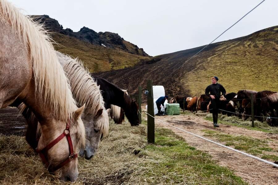 Miser sur le bon cheval
