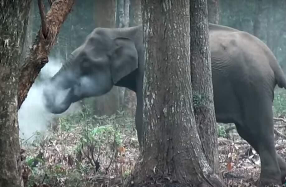 Puff l'éléphant magique