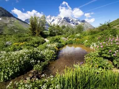 Hautes-Alpes : au jardin du Lautaret, un tour du monde des fleurs de montagne