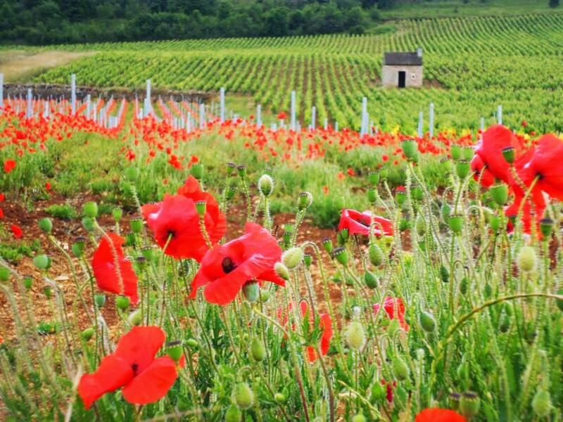 France - Profiter de la campagne givrotine