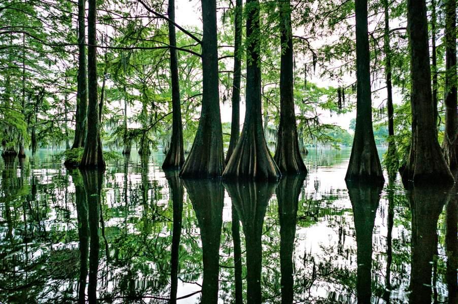 Au long du Mississippi, ce Sud tourmenté dévoile sa nature sauvage