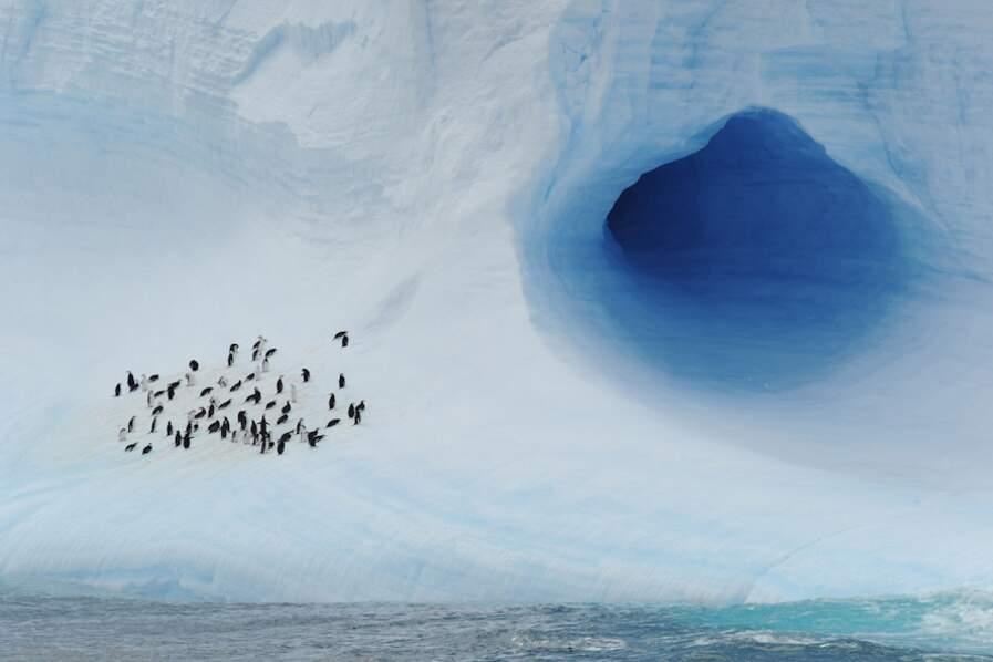 Colonie de manchots - Antarctique