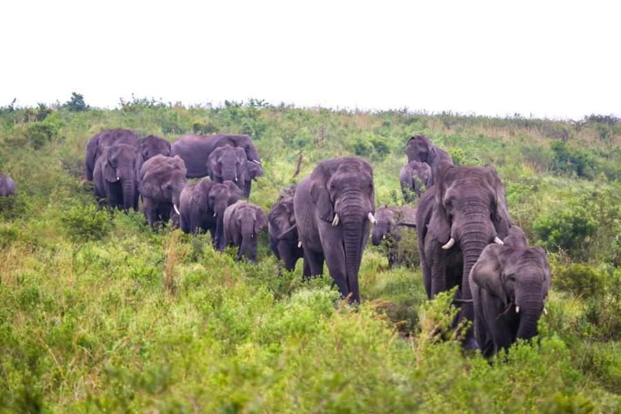 Un troupeau d'éléphants en guise de premiers pensionnaires