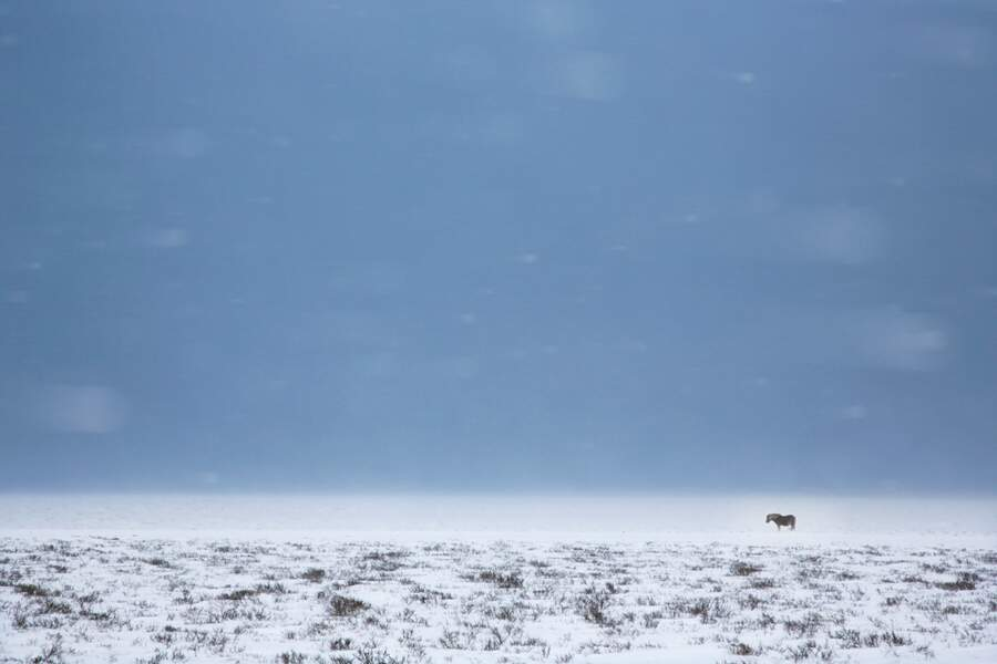 Le cheval solitaire