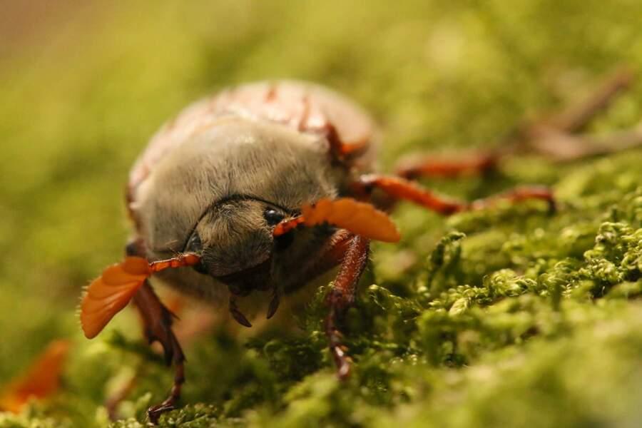 Qui a dit que les insectes n'étaient pas mignons ?