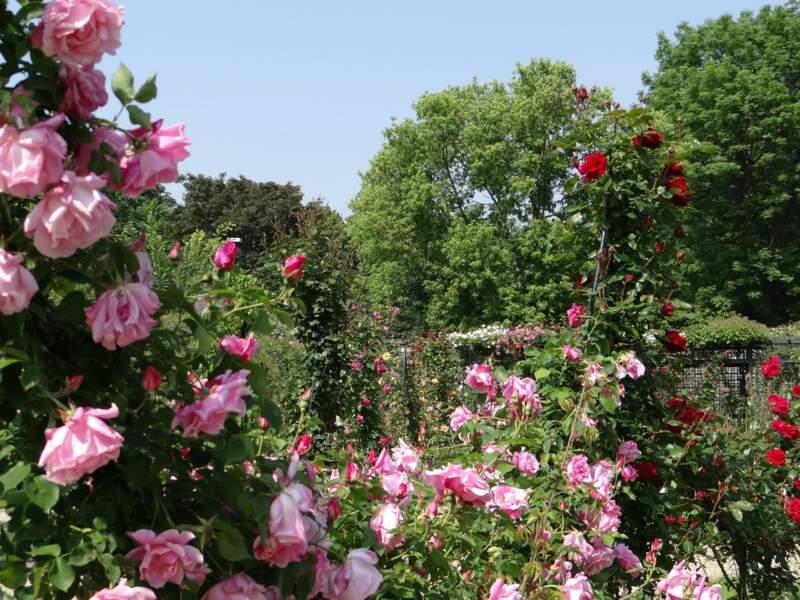 Détente à la roseraie du Val-de-Marne