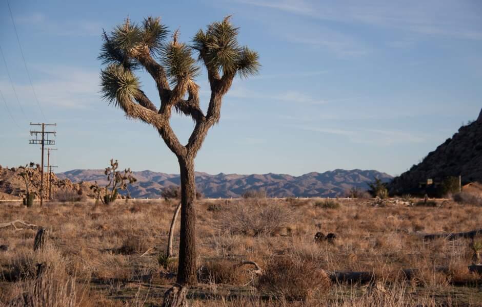 Un mort à Yucca Valley
