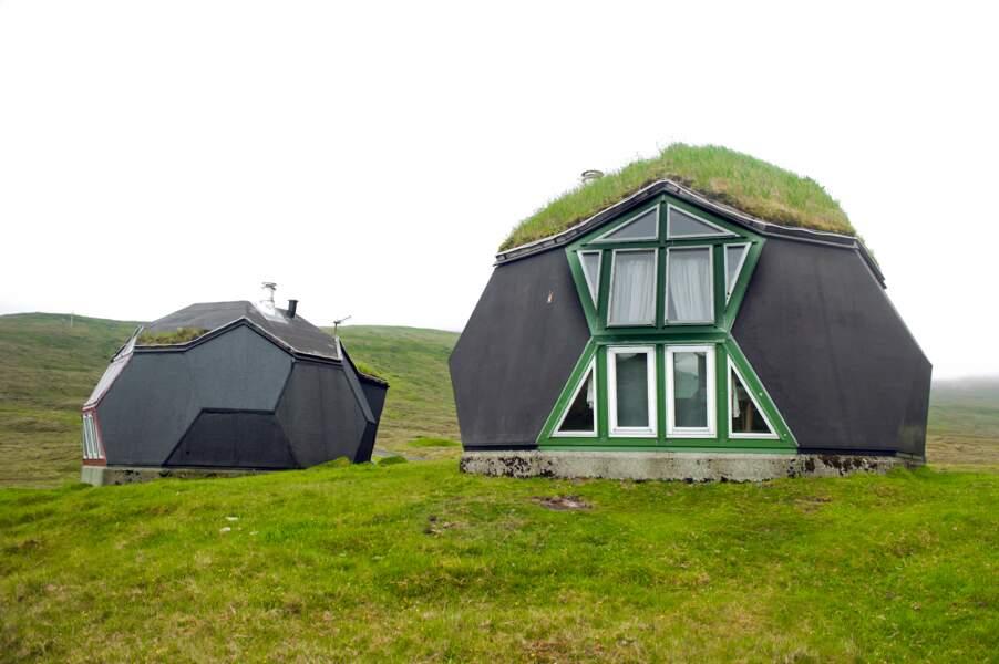 Des igloos dans l'herbe