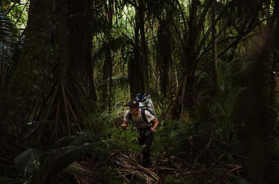 Lois de la jungle