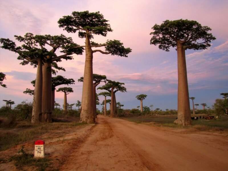 Diaporama n°2 - Madagascar : une nature d'exception
