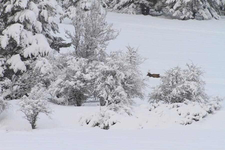Cerf dans un paysage d'hiver, en France, par Karim Smaoui / Communauté GEO