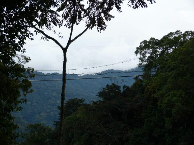 Survoler la forêt tropicale sur la Canopée