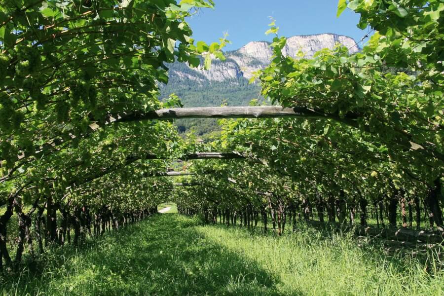 Italie, Trentin-Tyrol du Sud