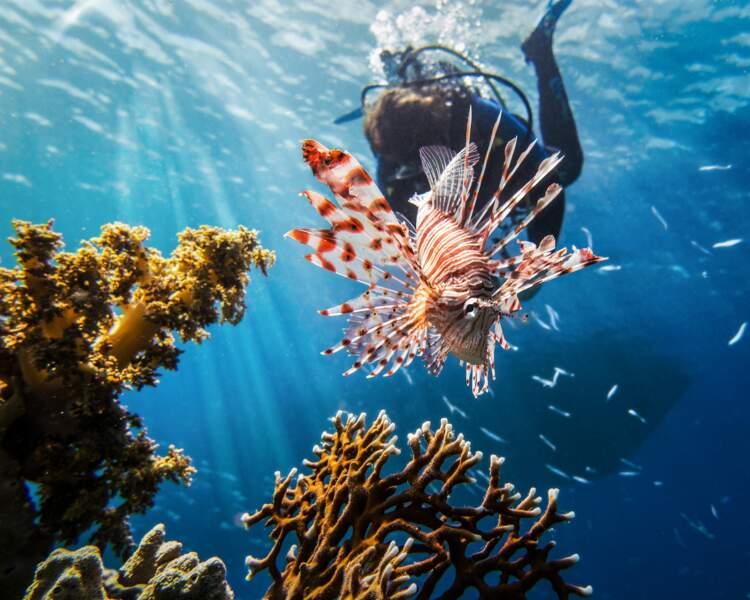 6e spot: la mer Rouge en Égypte
