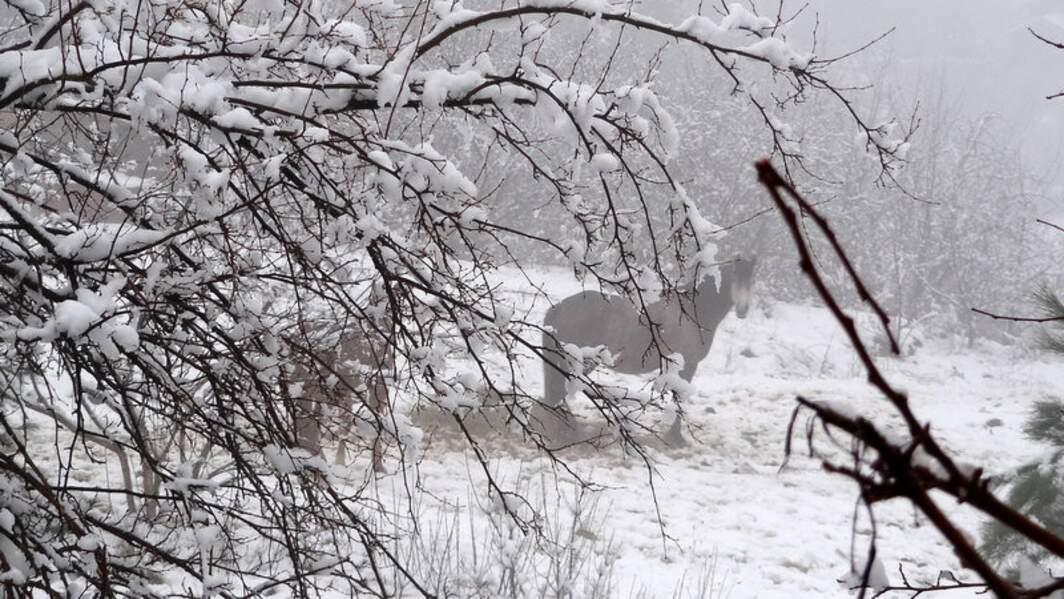 Cheval en Ardèche, France, par Nadine Marocelli / Communauté GEO