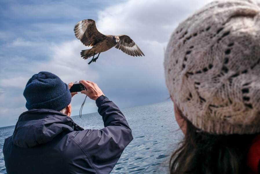 Noss, sanctuaire ornithologique