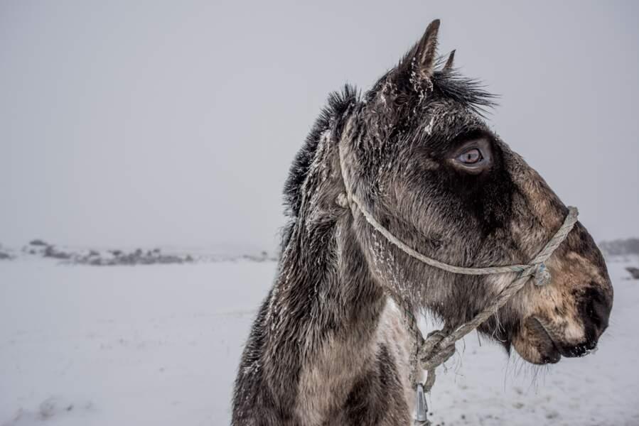 La Terre de Feu sous la neige