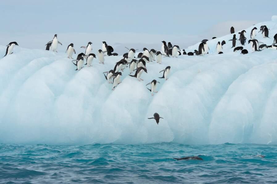Terre-Adélie - Antarctique