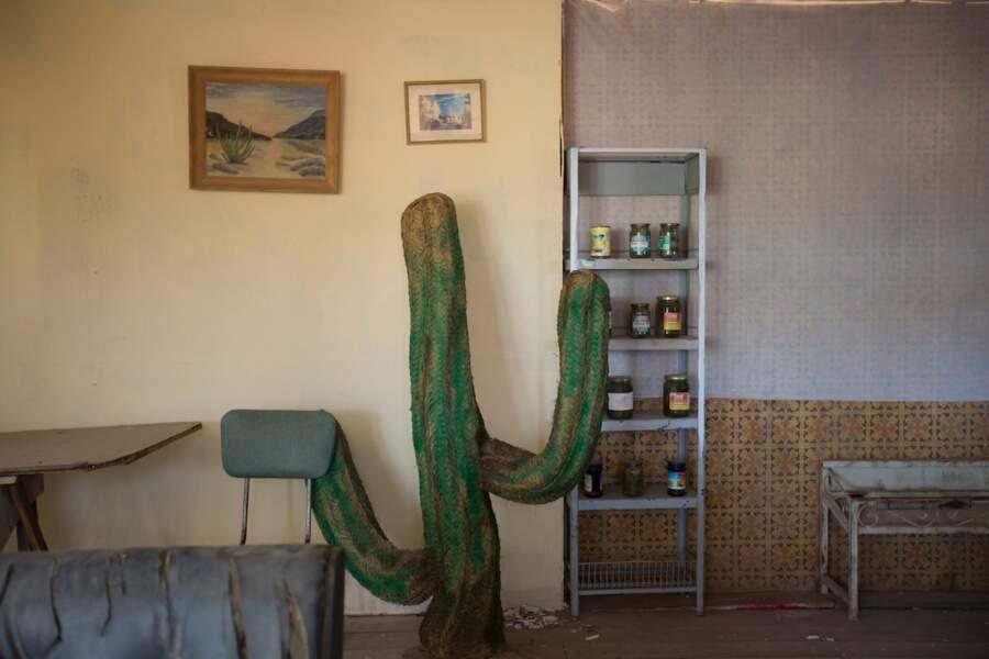 Dans les films, il y a des cactus