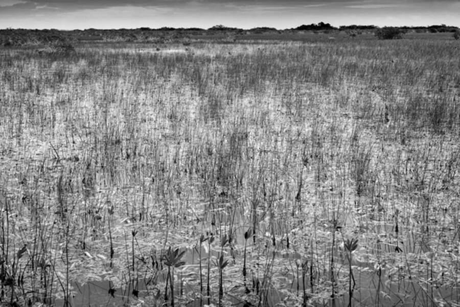 Les prairies de marne