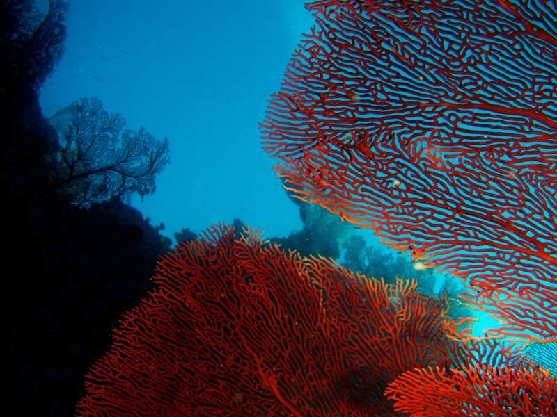 Le récif de Poindimié