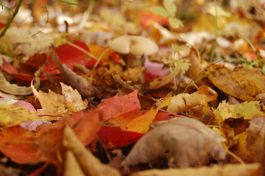 Feuilles d'automne au Canada